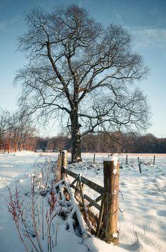 Alone at Christmas, Pitfour Estate, Scotland