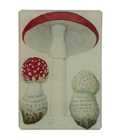 John Derian Mushroom Tiny Glass Tray at Liberty