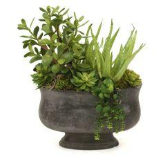 Distinctive Designs Artificial Succulent Garden Silk Plant - 2943