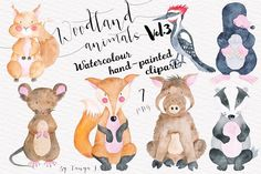 Woodland animals Vol.3 Set - Illustrations