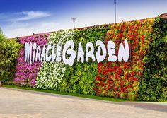 Dubai Miracle Garden is definitely a must-see tourist destination in Dubai. Take a glimpse of paradise and book your next flight to Dubai! In Dubai, Dubai Trip, Dubai Miracle Garden, Botanical Gardens Near Me, Million Flowers, Tree Mushrooms, Dubai Travel, Big Garden, Large Flowers