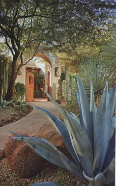 Desert landscaping is different than other styles of landscape designs because it requires the use of desert plants. Modern Landscaping, Front Yard Landscaping, Landscaping Ideas, Landscaping Sand, Spanish Landscaping, Modern Patio, Patio Ideas, Backyard Ideas, Landscape Architecture
