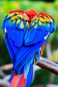 que colorido!!
