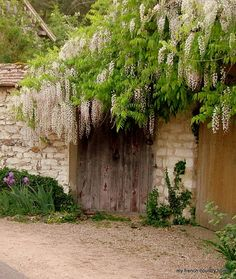 Wisteria, Wall, Flowers, Gate