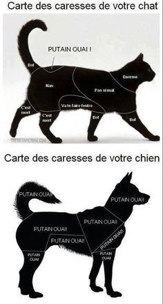 HUMOUR - Carte des caresses chez le chat et le chien.                                                                                                                                                                                 Plus