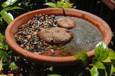Water for Bees and Butterflies for Breast Cancer Garden
