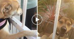 Cão Recusa-se a Passear Se o Seu Melhor Amigo Não For Com Ele http://www.funco.biz/cao-recusa-passear-melhor-amigo-nao-for/