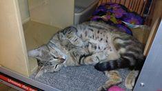 Cat At Petco - http://cutecatshq.com/cats/cat-at-petco/