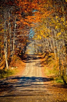 Autumn road [unable to determine location or photographer]