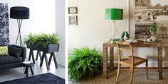 Helechos para decorar interiores