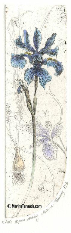 Iris - Marina Terauds - etching