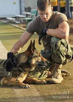 Wicked Training Your German Shepherd Dog Ideas. Mind Blowing Training Your German Shepherd Dog Ideas. Army Dogs, Police Dogs, Military Working Dogs, Military Dogs, Military Service, Military Army, Military Life, Malinois, Schaefer