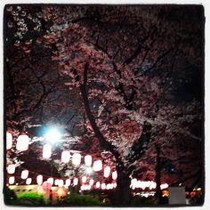 Cherry Blossoms in Tokyo #sakura2012