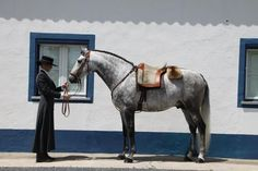 Couto dos Pardinhos - Lusitano in Portuguese wear