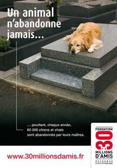 les refuges d'animaux, un sujet de saison – Come4News