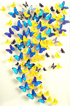 Steven Albarabes creates beautiful works of art with real butterflies, that have died of natural death. They are really creative and interesting, just breath taking...