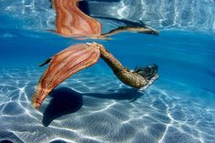 POP SURREALISM: Mermaid Photography  http://popsurrealismart.blogspot.com/2012/05/mermaid-photography.html#