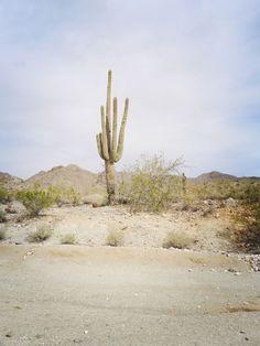 Desert + cactus: