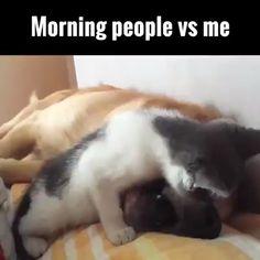 Morgen Leute gegen mich lol - Cαt/ӄíɬɬɛຖ gíʄຣ & ʋí∂ɛ⚬ຣ - Funny Animal Jokes, Cute Funny Animals, Funny Animal Pictures, Animal Memes, Cute Baby Animals, Funny Cute, Funny Dogs, Cute Dogs, Cute Animal Humor