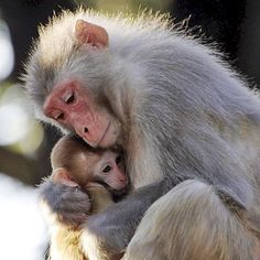 Tiernas tomas de momentos madre e hijo en la naturaleza.