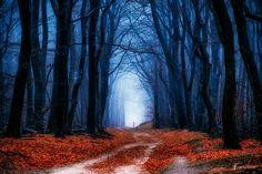 Nobody is Afraid of Red & Blue by Lars van de Goor   Lars van de Goor: Photos          500px
