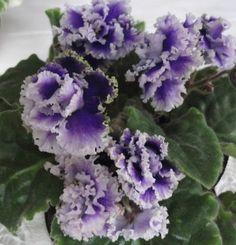 rostliny v bytě - Hledat Googlem Easy To Grow Houseplants, Smelling Salts, Normal House, Plants Delivered, Snake Plant, House And Home Magazine, Chrysanthemum, Orchids, Violets