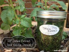 DIY Stevia Extract {and Vanilla Stevia}