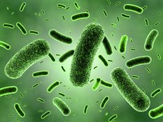 Search for better biofuels microbes leads to human gut Date: September 23, 2014 Source: University of Illinois at Urbana-Champaign Summary: Scientists have scoured cow rumens and termite guts for microbes that can efficiently break down plant cell walls for the production of next-generation biofuels, but some of the best microbial candidates actually may reside in the human lower intestine, researchers report.