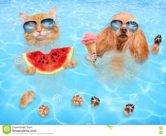 Happy summer!!! #opticamylova #sunglasses