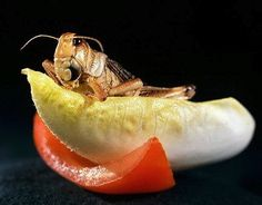 Entomophagy: Edible Insects and the Future of Food