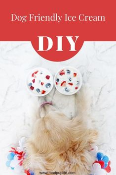 Dog Accessories Display DIY Dog Ice Cream - Perfect For Memorial Day Festivities.Dog Accessories Display DIY Dog Ice Cream - Perfect For Memorial Day Festivities Diy Dog Treats, Homemade Dog Treats, Dog Treat Recipes, Dog Food Recipes, Cake Recipes, Tiny Dog Breeds, Dog Breeds Little, Diy Dog Toys, Best Dog Toys