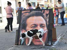25 photos de chiens prises exactement au bon moment. Excellent !