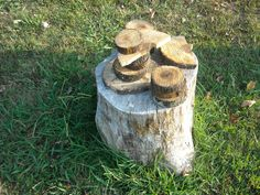 Tree cookies for everyone! Ideas of how to prepare and incorporate tree cookies into an outdoor learning environment.