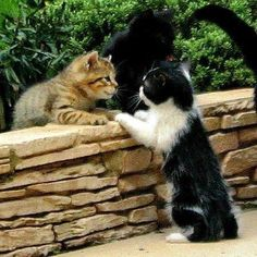 Good Morning Fred Gatitos Adorables Gatos Bonitos Gatos