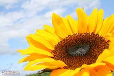 Sunbathing Sunflower