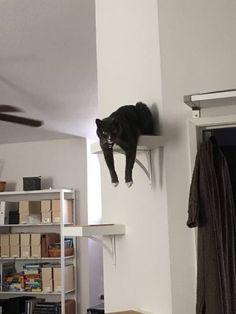 """Mi piace impicciarmi!"""