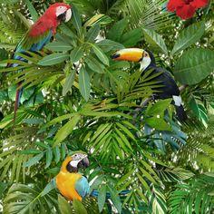 Tropical Jungle Parrots Wallpaper Toucan Bird Green Forest Leaves 601538 | Bricolage, Papier peint: outils, access., Rouleaux de papier peint | eBay!