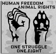 animal liberation ~