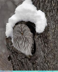 must nap under my stylish snow hat