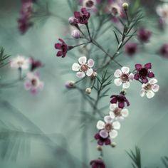 - just breathe - little flowers