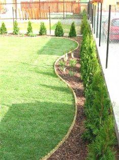 Gardens Discover 46 Elegant Evergreen Vines Home Decor Ideas Back Gardens, Small Gardens, Outdoor Gardens, Landscaping Along Fence, Outdoor Landscaping, Landscaping Ideas, Arborvitae Landscaping, Backyard Garden Design, Small Garden Design