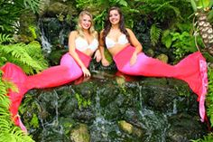 The Lowcountry Loves The World Famous Weeki Wachee Mermaids at the South Carolina Aquarium