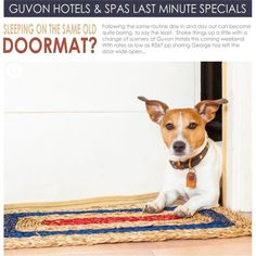 1,299 Followers, 718 Following, 544 Posts - See Instagram photos and videos from Guvon Hotels & Spas (@guvonhotelsandspas) Passion For Life, Real Dog, Tell The World, Real Friends, Hotel Spa, Spas, The Help, Followers, This Is Us
