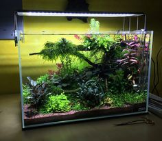 The Valley of Flowers Aquascape 45p