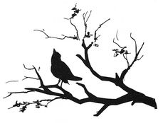 Silhouette: Bird On Branch Photograph  - Silhouette: Bird On Branch Fine Art Print