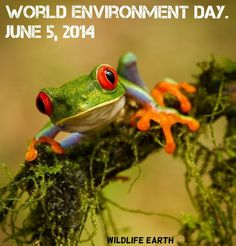 """World Environment Day : """"Raise Your Voice, Not the Sea Level"""""""