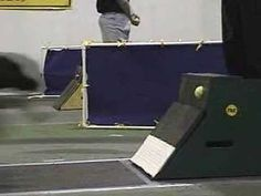 Here's BlackJack (a Lab) doing a perfect flyball box turn