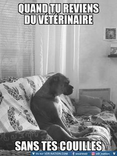 #VDR #DROLE #HUMOUR #FUN #RIRE #OMG Dog Lover Quotes, Dog Lovers, Image Gag, Animal Pictures, Funny Pictures, French Meme, Funny Memes, Jokes, Animals And Pets
