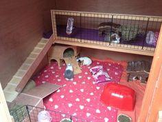 guinea pig homes Guinea Pig Run, Diy Guinea Pig Cage, Guinea Pig Hutch, Guinea Pig House, Bunny Sheds, Rabbit Shed, Pet Rabbit, Pig Habitat, Rabbit Habitat