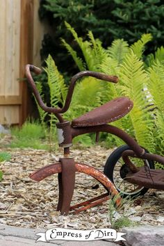Rusty bike in garden with ferns